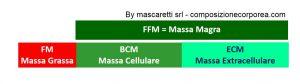 massa cellulare