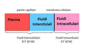 fluidi corporei
