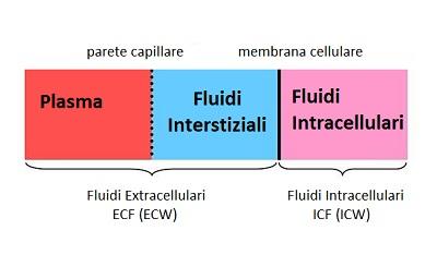 Regolazione della distribuzione dei fluidi corporei